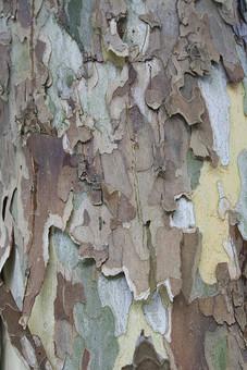 テクスチャ テクスチャー バックグラウンド 背景 素材 背景素材 樹皮 表面 自然 茶色 緑 植物 樹木 大木 樹 木 環境 迷彩 木肌 模様 色彩 色合い 形 皮 剥ける