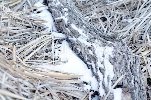 冬景色25の写真