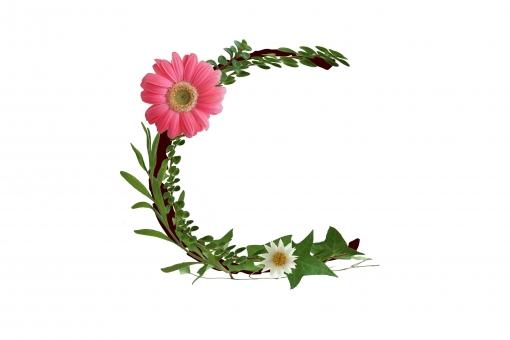 アルファベット ローマ字 英文字 植物 花 ガーベラ 文字 テクスチャ 素材 白い花 グリーン アイビー