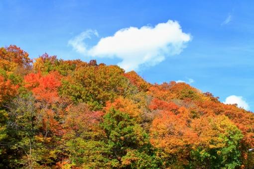山 紅葉 見ごろ 色鮮やか 秋の空 青空 秋 雲行