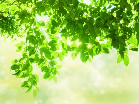 自然 植物 緑 葉っぱ グリーン 黄緑 新緑 明るい 山 林 樹木 自然 春 夏 爽やか 初夏 癒し リラクゼーション 木 木の葉 木漏れ日 輝き マイナスイオン 爽やか 森林 セラピー 5月 背景 テクスチャー バック