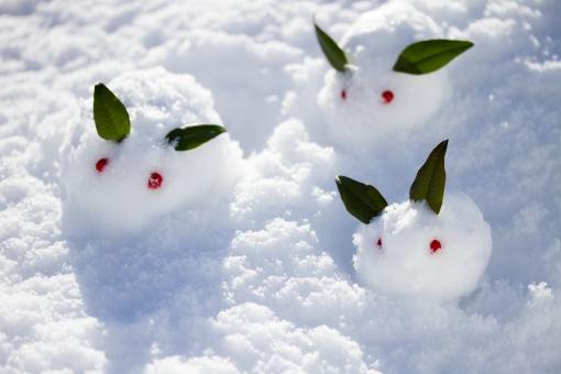 ゆきうさぎ 雪兎 雪ウサギ 冬 雪景色 雪原 南天 植物 葉 実 可愛い かわいい お正月 和 雪像 雪肌 雪遊び