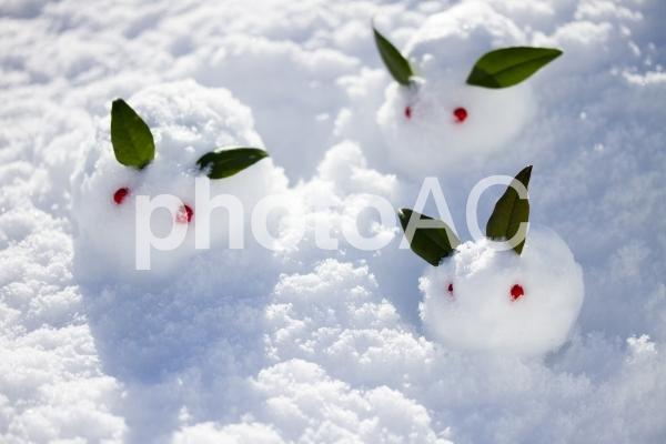 雪うさぎ3の写真