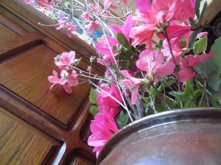 玄関 花 ピンク 花々 飾り 小人目線 小人 小人視線 開花 つぼみ 祝い 祝福 いってらっしゃい お帰りなさい アングル リラックス 癒し