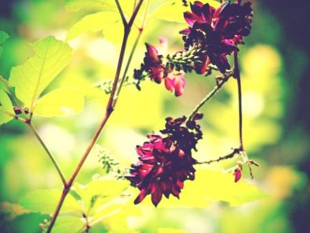 花 植物 植物園 紫 光 陽だまり レトロ トイフォト