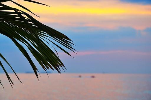 東南アジア 海と葉っぱの写真