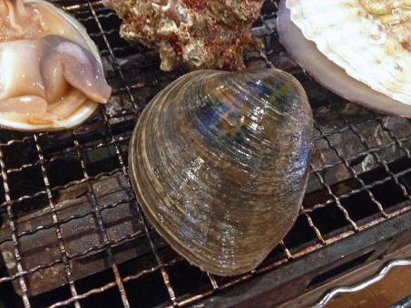 浜焼き ホンビノスガイ 白蛤 はまぐり 蛤 ハマグリ 二枚貝 貝 貝類 魚介料理 魚貝料理 魚介 魚貝 魚介類 魚貝類 海鮮 海鮮料理 焼き物 網焼き 日本料理 和食 日本食 食べ物 食品 食材 料理 調理 グルメ 食糧 食卓