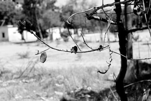 白黒 モノクロ 樹木 樹 木 植物 自然 景色 風景 枝 葉 葉っぱ 癒し ストレス 休憩 休息 森林浴 森 林 枯れる 落葉 秋 冬 草原 広場