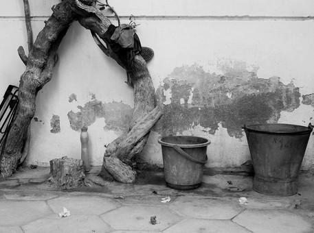 自然 植物 木 樹木 成長 育つ 伸びる 枯れる 曲がる 幹 枝 バケツ 入れ物 器 塀 壁 剥げる 地面 コンクリート 切り株 折れる 修復 直す 掃除 古い 歴史 建物 建築 建築物 無人 室外 屋外 景観