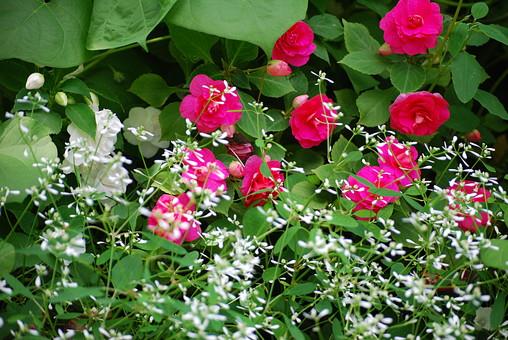 自然 風景 環境 植物 花 草花 観葉 手入れ 栽培 世話 水やり 植える 育てる ベランダ 庭 林 公園 花壇 癒し 咲く 開花 成長 土 観察 アップ たくさん きれい 美しい
