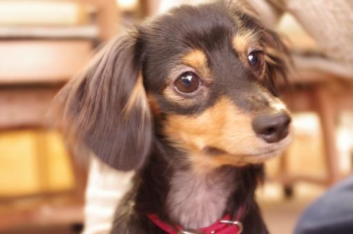 犬 いぬ イヌ 首 かしげる 動物 ペット 背景 かわいい 癒し