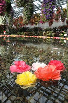 ぼたん 牡丹 ボタン 花 植物 カラフル 自然 水 水に浮く花 水面 流れる かわいい 日本の花 風流 庭園 池 砂利 澄んだ水 和 公園 5月 花言葉 富貴 恥じらい 高貴 壮麗