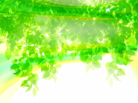 緑 グリーン 黄緑 新緑 明るい 森 植物 木 若葉 自然 春 初夏 葉っぱ 癒し リラクゼーション 葉 木漏れ日 輝き マイナスイオン 爽やか 森林 眩しい 5月 背景 テクスチャー バックグラウンド 風 波 流れ 空気
