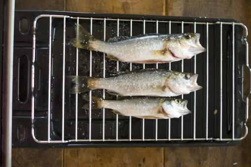 スズキの下処理 スズキ セイゴ コッパ ハクラ 魚 さかな サカナ 鮮魚 下処理 調理 料理 魚料理 お魚 海の幸 焼く グリル