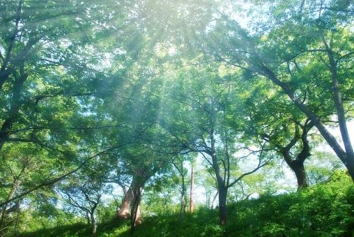 新緑に射す光の写真