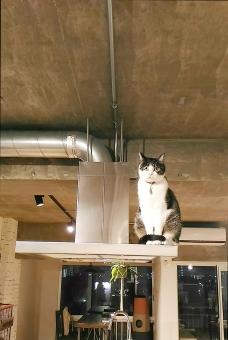 何人もありません 屋内で 1 哺乳動物 屋外で 家具 建築 家族 窓 肖像画 可愛い 日光 動物 扉 家 椅子 木材 座ります ペット お出迎え 猫 おかえりなさい お帰り 換気扇 首輪