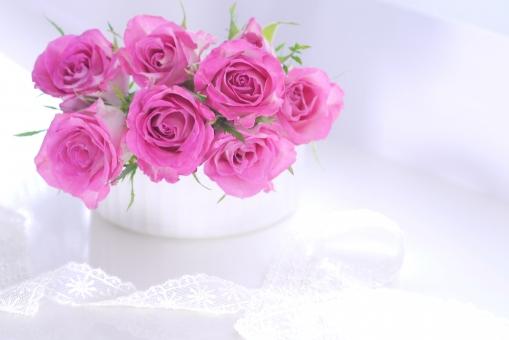 白バック 白背景 女性 メッセージ リラックス 植物 美容 健康 アップ 明るい プレゼント ギフト 誕生日 贈り物 リボン 花 バラ 薔薇 フラワーアレンジ かわいい お祝い 緑 フラワーアレンジメント コピースペース 愛 春 ピンク 綺麗 きれい 白 母の日 5月 素材 恋愛 背景 ブーケ 可愛い 癒し カード 光 花束 11月 9月 優しい 10月 幸福 ばら アロマ アレンジ 雑貨 クローズアップ バックグラウンド 背景素材 行事 初夏 バレンタイン ホワイトデー 美しい 壁紙 イメージ 結婚 結婚式 記念日 キラキラ レース メッセージカード 父の日 幸せ グリーティングカード 幸運 エステ 華やか かすみ草 温かい やわらかい マクロ 6月 テキストスペース ソフト 5月 六月 おめでとう リラクゼーション くつろぎ 五月 愛らしい 祝福 ラッキー 2月 柔かい しあわせ nanairo-bara