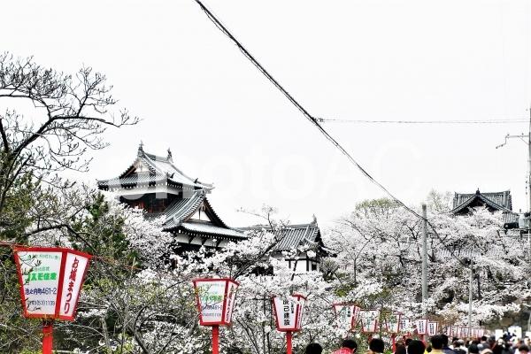 奈良県郡山城公園桜まつりの写真