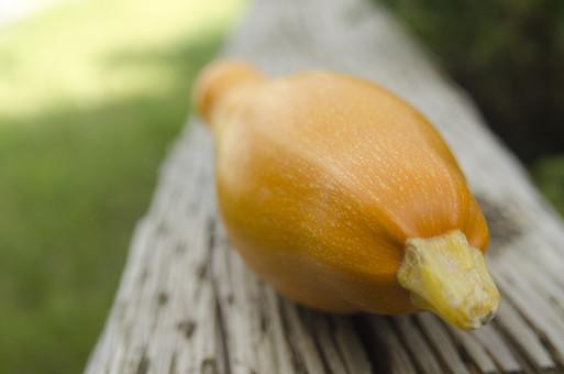 ズッキーニ ウリ科 カボチャ属 黄色 野菜 食料品 食品 食べ物 食べる 健康 フレッシュ 新鮮 自然 ダイエット 食材 農業 収穫 栄養 まるごと 実 ラタトゥイユ 瓜 イタリア料理 フランス料理 テラス 屋外 外