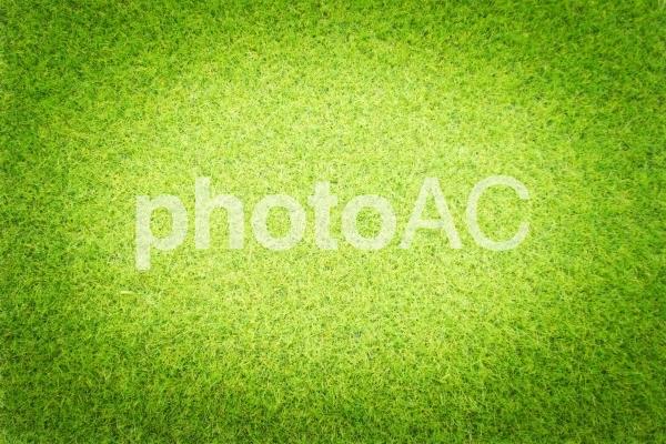 芝生_3_スポットライトの写真
