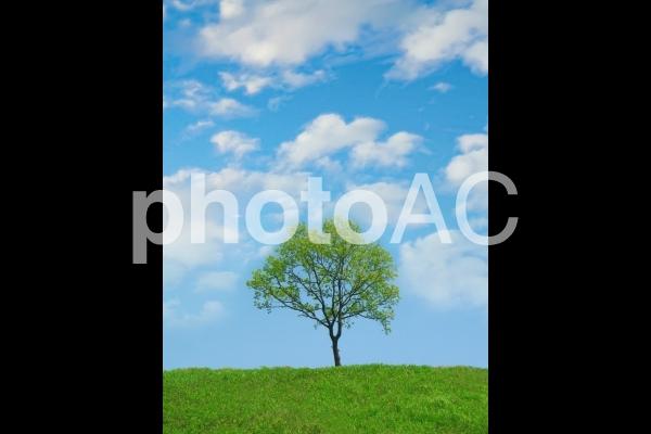 さわやか 青空と草原と木の写真