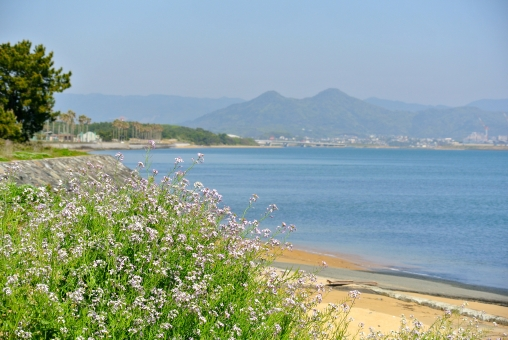 福岡市東区 海の中道 海岸 海 景色 湾岸 博多湾 花 パープル 小さい花 海の町 志賀島 都会の海 風景 都会の自然 fukuoka beach ocean blue flower かわいい 青空