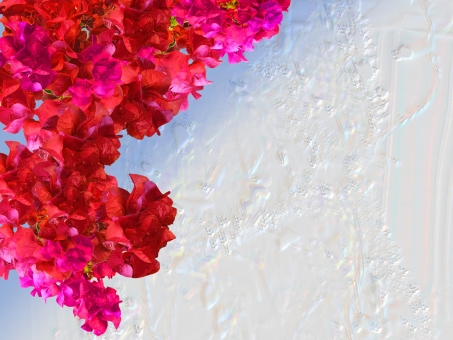 ブーゲンビリア 自然 植物 樹木 木 初夏 夏 爽やか クリーンイメージ 光 透過光 待ち受け 清潔感 澄んだ空気 若葉 眩しい 壁紙 テクスチャ ナチュラル おしゃれ コピースペース 背景 香り 清楚 6月 ウエディング 花嫁 ウエルカムボード 赤い花 エンボス