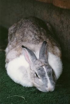 satochi サトチ ウサギ rabbit 動物 動物園 多摩動物公園 うさぎ animal どうぶつ ドウブツ ドウブツエン どうぶつえん zoo 太い ふとい thick fat