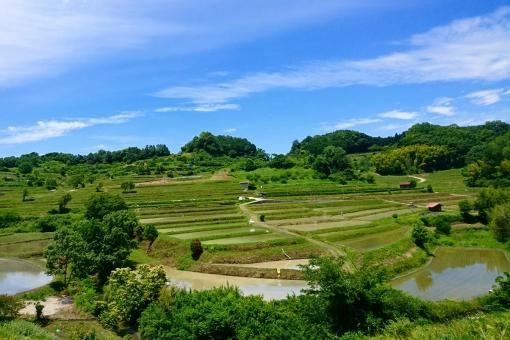 奈良 稲渕の棚田の写真