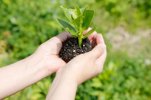 人物 手 腕 手の中 持つ 苗木 植物 葉っぱ 園芸 ガーデニング 植える 栽培 自然 グリーン 新芽 若葉 新緑 土 エコ 環境 ナチュラル 手元 アップ 環境保護 環境問題 屋外 野外 外 両手