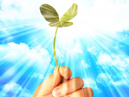 空 大空 植物 三つ葉 ミツバ みつば 三葉 手 指 夢 爪 親指 人差し指 中指 小指 雲 入道雲 未来 育つ 教育 日光 太陽 日差し 天気 快晴 晴天 晴 テクスチャ 自然 背景