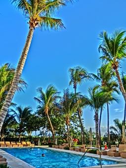プール 椰子の木 ヤシの木 やしの木 青空 リゾート バカンス 常夏 南国 夏 bluesky 数本 植物 ホテル 青 アート 反射 サマーベッド 癒し 開放感 風景 景色 南の国 南の島 快晴 晴れ 屋外 室外 外国 木