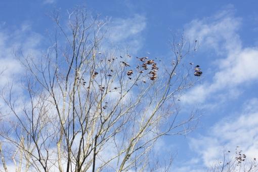 冬枯れの木の写真