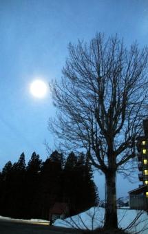 夜明け 月 大木 青 樹木 木 雪 青空 縦向き ホテル あかり 窓 真冬 二月