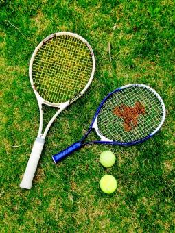 テニス 大人 キッズ ラケット ボール スポーツ 運動 趣味 楽しみ 芝生 緑 白 青 ウィルソン クマ くま 黄色
