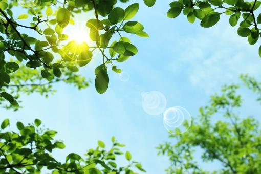 新緑と太陽光の写真