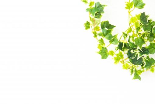 白バック コピースペース 植物 クリーン 壁 清潔 緑 グリーン つた 観葉植物 家 エコロジー 葉っぱ リーフ 節約 省エネ 環境