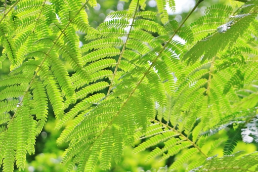 初夏 グリーン 葉っぱ 葉 緑 緑色 光 陽射し 日差し 重なり 枝垂れ 垂れる 枝 植物 自然 明るい 風景 背景 景色 壁紙 テクスチャ 綺麗 きれい キレイ 癒し 憩い 日影 日陰 木陰 模様 連なり たくさん 心地いい 心地良い 若い 若々しい 若葉 青い 青葉 穏やか 優しい 優しさ 揺れる 涼しさ 涼
