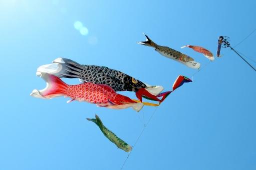 鯉のぼり コイノボリ こいのぼり 鯉幟 端午の節句 五月五日 5月5日 青空 泳ぐ 空 ブルースカイ スカイ sky 風景 背景
