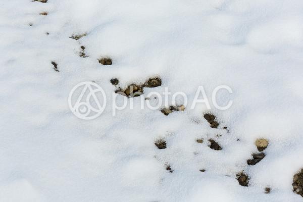 雪48の写真