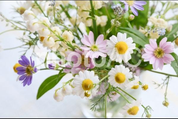 カモミールの切り花の写真