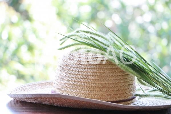 麦わら帽子と夏草の写真