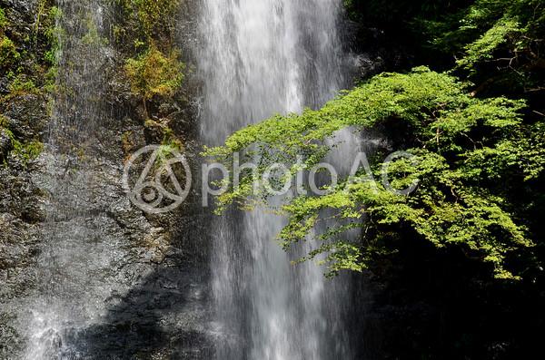 箕面大滝3の写真