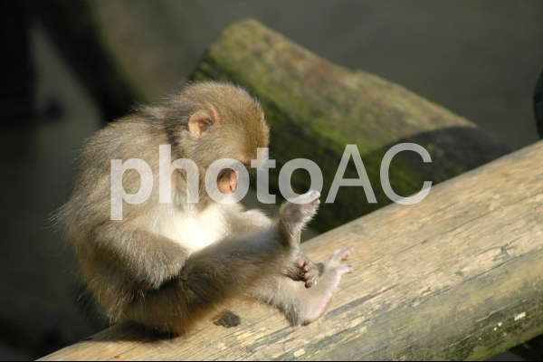 小猿の写真
