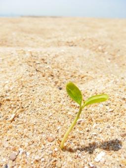 砂漠 砂浜 砂 植物 芽 芽生え 希望 新しい オアシス 開始