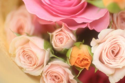 花びら 光 パステルカラー キラキラ 夏 園芸 花壇 天気 風景 おめでとう ホワイト 白 淡い バックグラウンド フラワー 爽やか happy birthday 背景デザイン 自然 ナチュラル 幸せ ブーケ 春 薔薇 バラ ばら 花束 プレゼント フラワーアレンジ 入学 贈り物 ギフト お祝い 結婚 母の日 誕生日 ウェディング カード メッセージ バースディカード 背景 壁紙 花 植物 卒業 初夏 5月 記念日 メッセージカード 可愛い かわいい 優しい ソフト やわらかい バレンタイン バレンタインデー ホワイトデー 背景素材 素材 ピンク 赤 rose rosa ローズ