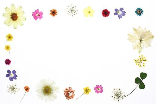 押し花フレーム1の写真