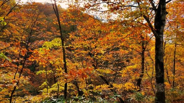 北海道の紅葉34の写真