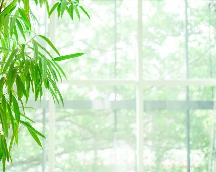 窓辺の観葉植物の写真