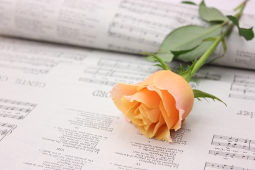 花 植物 薔薇 ばら バラ オレンジ 綺麗 美しい 切花 切り花 花びら フラワーアレンジメント 新聞 英字新聞 アンティーク